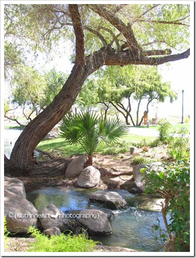 MLH 031108 Scottsdale Tree and Creek webview