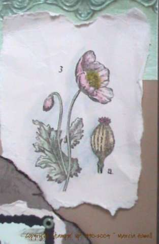 Page 2 ~ close up of torn flower